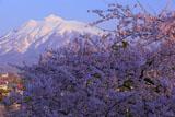 弘前城からの岩木山
