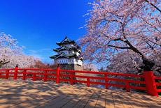 青森県の桜