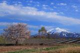 豊旗雲と鰺ヶ沢町の桜