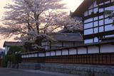 遠野市 旧村兵商家の桜