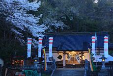 鍋倉公園の桜