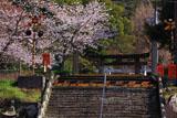 有田の踏切と桜