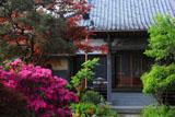 鎌倉教恩寺 ツツジと本堂