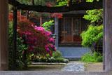 鎌倉教恩寺 山門越しに躑躅と本堂