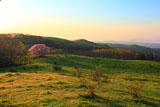 牧草地の朝と亀ヶ森の一本桜