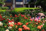 鎌倉文学館 バラ園と旧前田侯爵家別邸