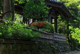 寿福寺 サツキと鐘楼