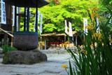 鎌倉 杉本寺のキショウブ