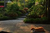 浄妙寺のももちゃん