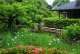 鎌倉光触寺 菖蒲園