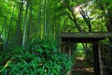 英勝寺の竹林中庭