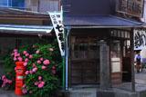 鎌倉御霊神社 力餅家の紫陽花