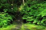 鎌倉妙法寺 シダ植物と苔石段