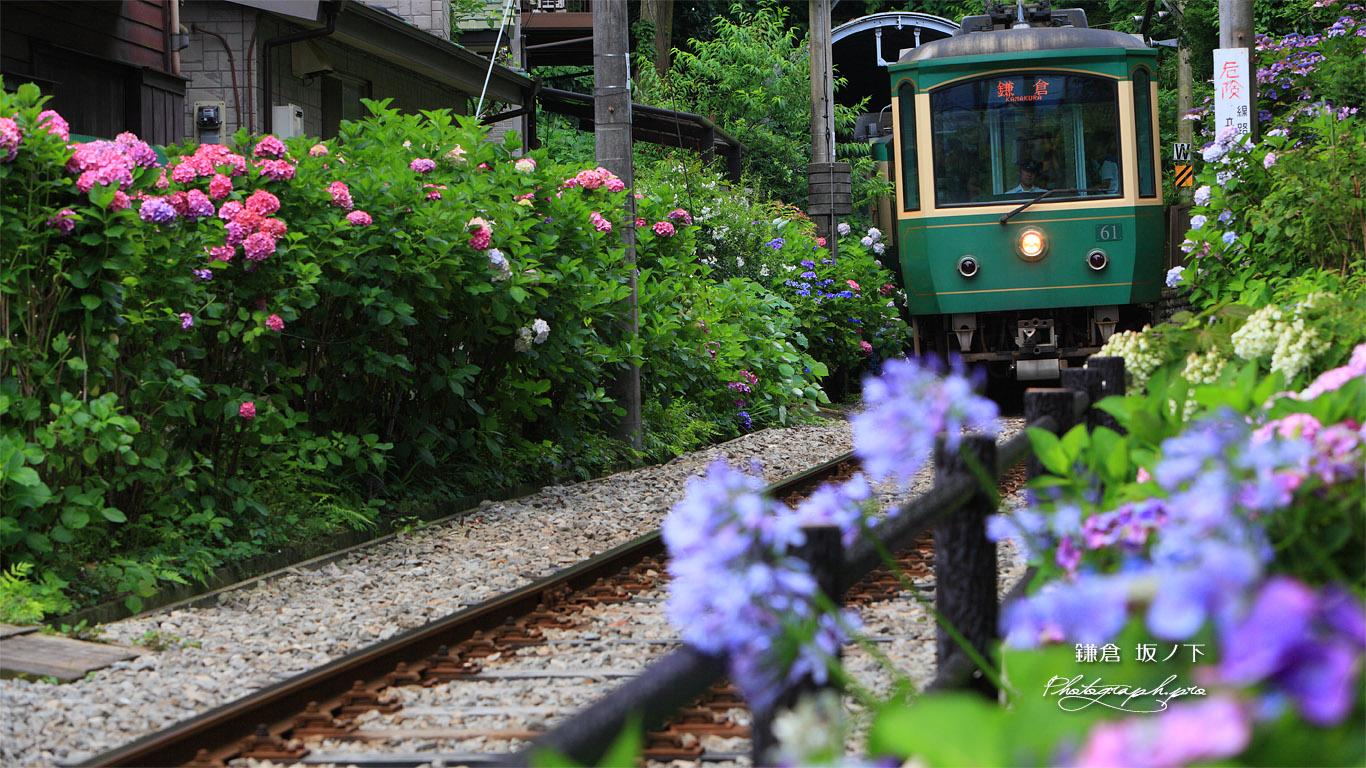 鎌倉 御霊神社の紫陽花と江ノ電 壁紙