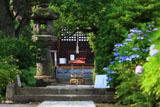 明王院 紫陽花と本堂