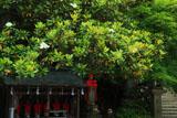 鎌倉長勝寺 タイサンボクと六地蔵