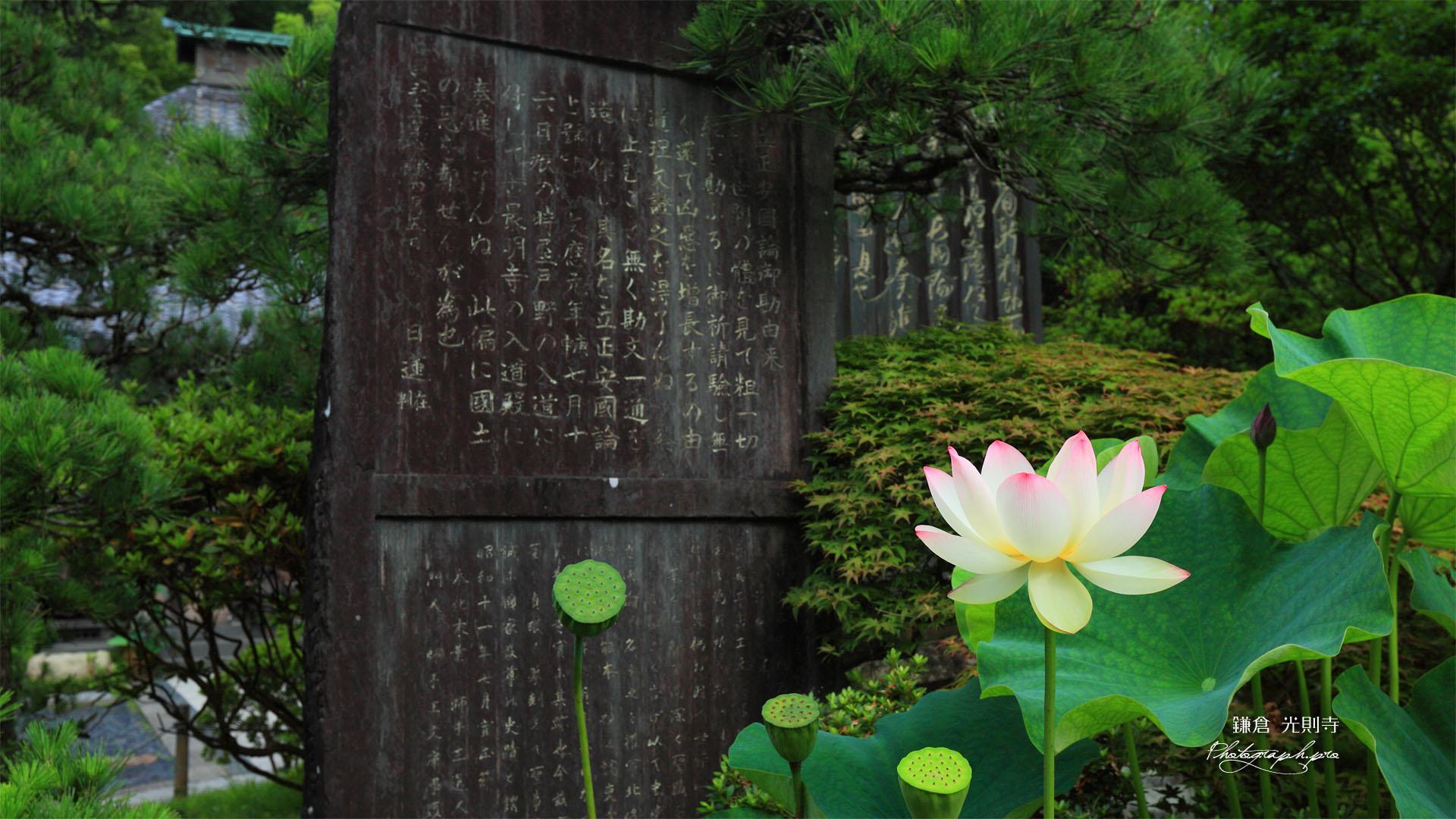 鎌倉光則寺のハスと立正安国論石碑