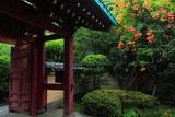 鎌倉光則寺山門とノウゼンカズラ
