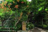 鎌倉長谷寺の和み地蔵とノウゼンカズラ
