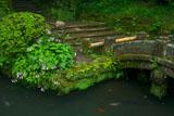 浄智寺甘露池とギボウシ