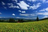 夏雲と十勝岳連峰