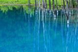 夏草映る美瑛の碧い池