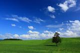 春よ来いの木 夏雲