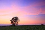 夕焼けの哲学の木