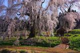 水中のしだれ桜と祠堂