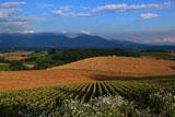 唐土畑と麦稈ロール