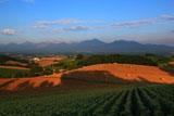 麦わらロールと十勝岳連峰
