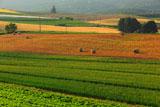 富良野の西日に耀く丘
