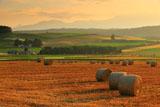 富良野の麦稈ロールと豆ニオ