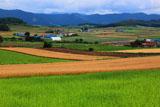富良野のパッチワークの丘