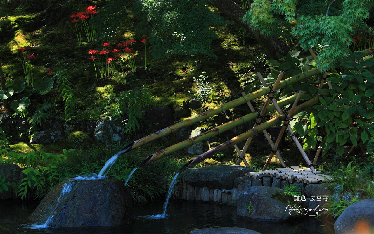 鎌倉長谷寺の妙智池とヒガンバナ 壁紙