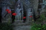 円覚寺龍隠庵のヒガンバナ