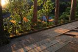 円覚寺続燈庵のヒガンバナ