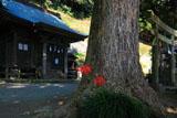 鎌倉十二所神社の彼岸花
