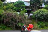 建長寺妙高院の萩
