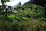 鎌倉浄光明寺 ハギとサギ