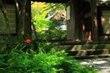 瑞泉寺 彼岸花と山門越しの庫裡