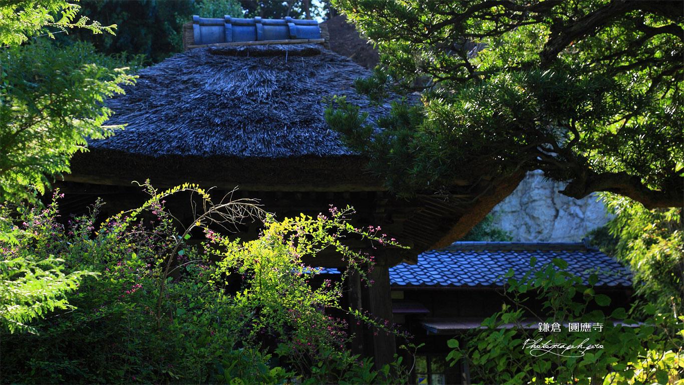 鎌倉円応寺 ハギと鐘楼 壁紙