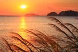 材木座 飯島岬の夕芒