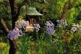 鎌倉龍宝寺の紫苑と稲荷堂