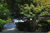 貞宗寺のキンモクセイ