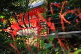 荏柄天神社のミズヒキ