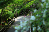 長谷寺のハギとヒガンバナ
