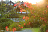 浄光明寺 サルスベリ越しの庫裡