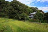 鎌倉山ノ内 田圃の稲穂
