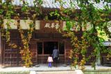 ピラカンサス越しの浄智寺仏殿